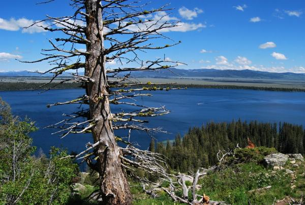 Grand Teton Jenny Lake Inspiration Point Panoramio1 courtesy of endovereric↗