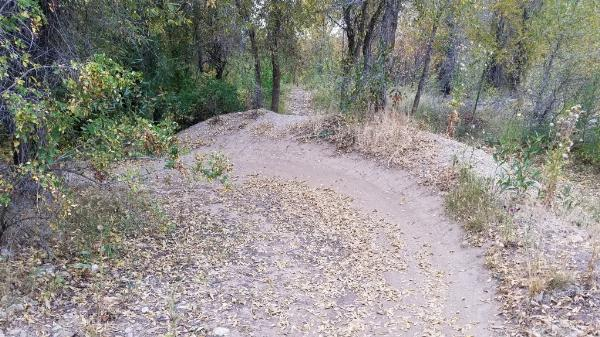 Berm among dirt jumps courtesy of elico3000↗