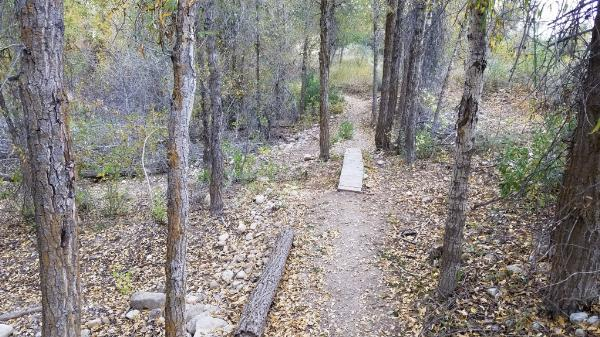 Wooden feature on singletrack loop courtesy of elico3000↗